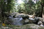 Rainforest river [aceh_0284]
