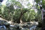 Rainforest river [aceh_0292]