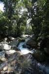 Rainforest river [aceh_0305]