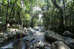 Rainforest river [aceh_0310]