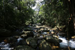 Rainforest river [aceh_0311]