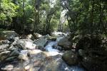 Rainforest river [aceh_0314]