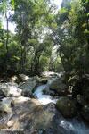 Rainforest river [aceh_0317]