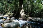 Rainforest river [aceh_0320]