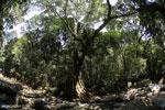 Rainforest river [aceh_0335]