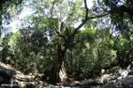 Rainforest river [aceh_0336]