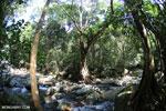 Rainforest river [aceh_0337]