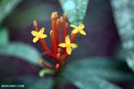Orange tubular flowers