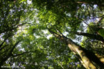 Aceh rainforest canopy