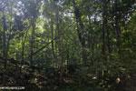 Aceh rainforest [aceh_0442]
