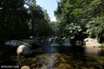 Rainforest stream [aceh_0444]