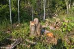 Logging [aceh_0504]