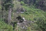 Smallholder deforestation in Aceh [aceh_0608]