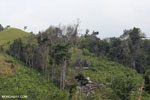 Smallholder deforestation in Aceh