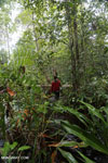 Hiking in a peat swamp in Borneo [kalteng_0021]
