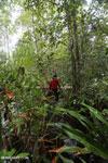 Hiking in a peat swamp in Borneo [kalteng_0022]