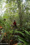 Hiking in a peat swamp in Borneo [kalteng_0024]