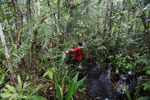 Hiking in a peat swamp in Borneo [kalteng_0025]