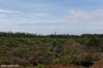 New oil palm plantation established on peatland outside Palangkaraya [kalteng_0055]