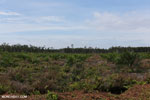 New oil palm plantation established on peatland outside Palangkaraya [kalteng_0056]
