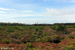 New oil palm plantation established on peatland outside Palangkaraya [kalteng_0059]