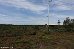 New oil palm plantation established on peatland outside Palangkaraya [kalteng_0060]