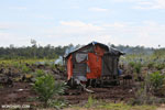 Hut amid a new oil palm plantation [kalteng_0067]