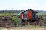 Hut amid a new oil palm plantation