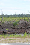 New oil palm plantation established on peatland outside Palangkaraya [kalteng_0084]