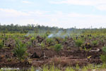 New oil palm plantation established on peatland outside Palangkaraya [kalteng_0093]