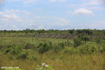 New oil palm plantation established on peatland outside Palangkaraya [kalteng_0096]