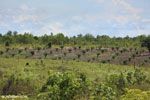 New oil palm plantation established on peatland outside Palangkaraya [kalteng_0097]