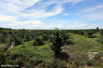 New oil palm plantation established on peatland outside Palangkaraya [kalteng_0106]