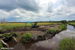 Draining peatlands for rice cultivation