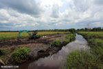 Draining peatlands for rice cultivation [kalteng_0113]