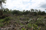 Slash-and-burn agriculture in Borneo [kalteng_0121]