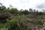 Slash-and-burn agriculture in Borneo [kalteng_0124]