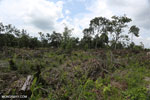 Slash-and-burn agriculture in Borneo [kalteng_0126]