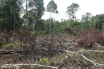 Slash-and-burn agriculture in Borneo [kalteng_0142]