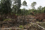 Slash-and-burn agriculture in Borneo [kalteng_0145]