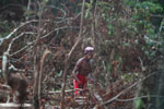 Farmer clearing peat forest in Indonesian Borneo [kalteng_0153]