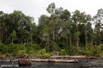 Burned forest, felled trees in Borneo peatland [kalteng_0188]