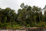 Burned forest, felled trees in Borneo peatland [kalteng_0191]