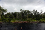 Burned forest, felled trees in Borneo peatland [kalteng_0197]