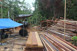 Illegal sawmill in Borneo [kalteng_0204]