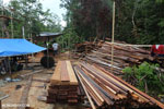 Illegal sawmill in Borneo [kalteng_0205]