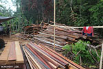 Illegal sawmill in Borneo [kalteng_0207]