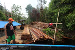 Workers at an illegal sawmill in Borneo [kalteng_0209]