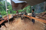 Illegal logging operation in Borneo [kalteng_0233]