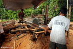 Illegal logging operation in Borneo [kalteng_0242]